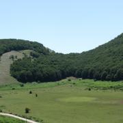 Camposauro